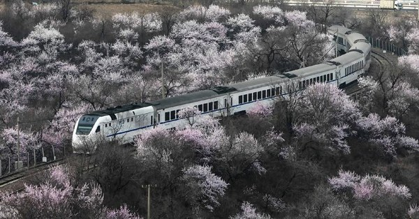 Wild flowers bloom at Juyongguan Pass of the Great Wall
