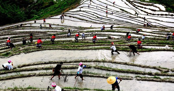 Spring plough kicks off in China