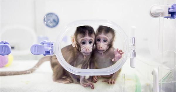 China says it has cloned a monkey using non-reproductive cells