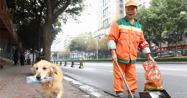 Canine companion: Pet helps work of sanitation worker