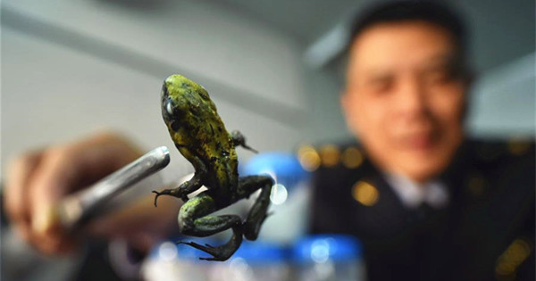 Beijing seizes live poison dart frogs from overseas parcel