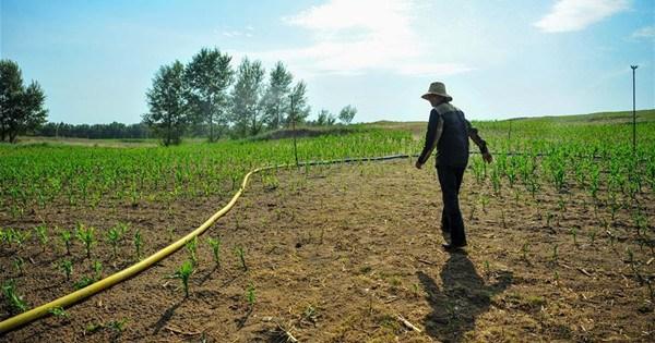 Drought hits farmland in N China