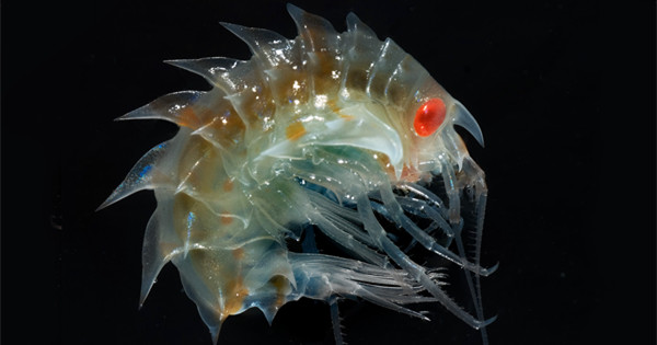 Photos: Creepy Antarctic sea creatures