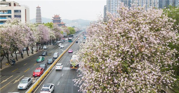 People enjoy spring scenery across China