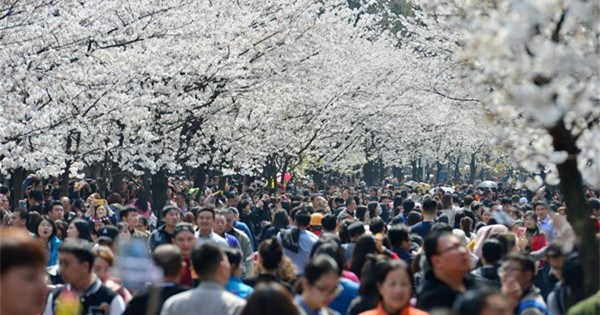 People enjoy blossoms across China