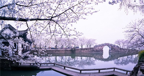 Cherry blossoms add to tranquil beauty of Wuxi