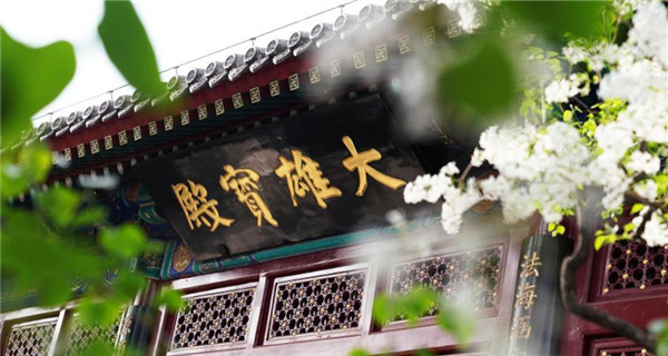 Ancient Fayuan Temple adorned by sea of flowers