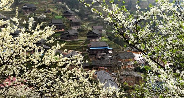 Plum blossoms in South China