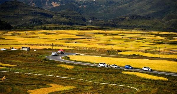 Paddy harvest season in Gaopo Village
