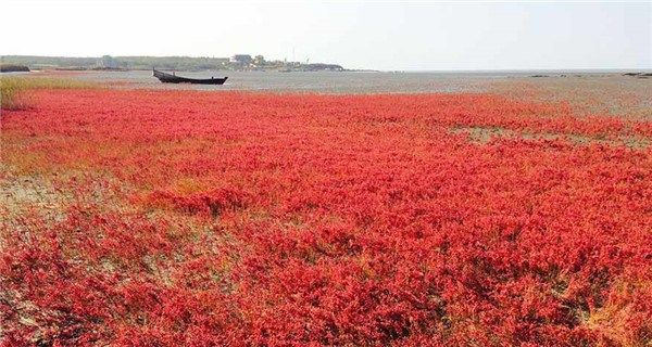 Beautiful red beach has stunning views in Northeast China