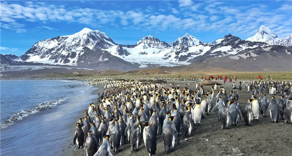 More than Antarctic - A fantastic journey