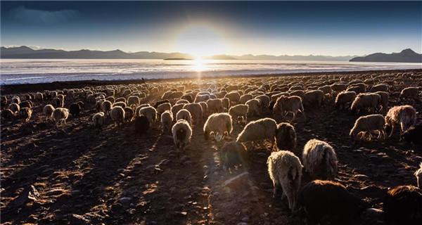 Scenery of plateau lake Puma Yumco in Tibet