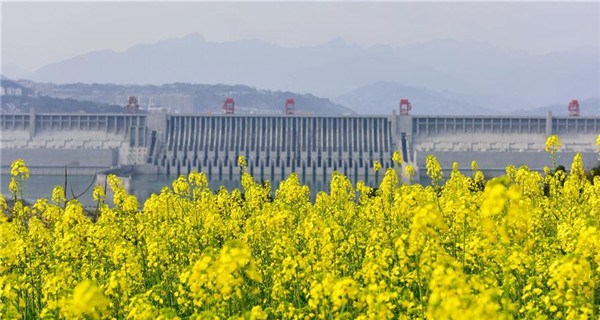 Blossoms scenery nearby Three Gorges Dam on Yangtze River