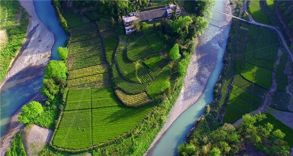 Aerial view of tea gardens in Hubei