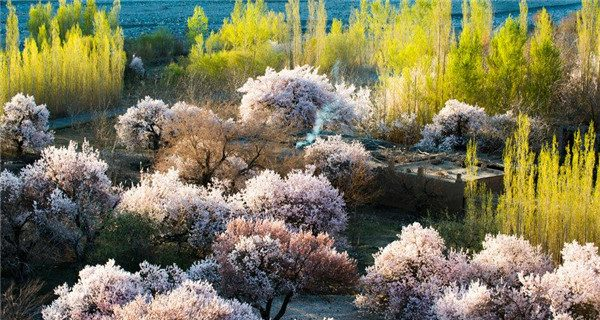 The natural beauty of Xinjiang amazes people