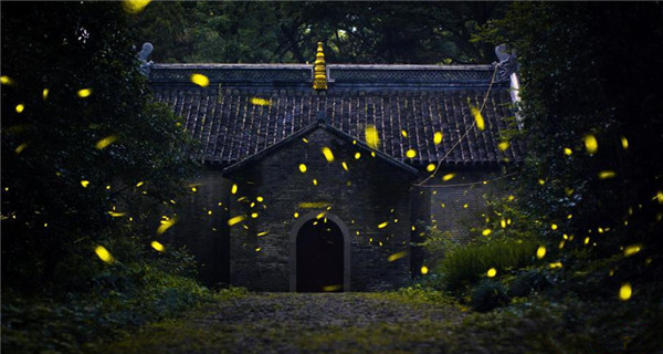 Temple attracts visitors for fireflies