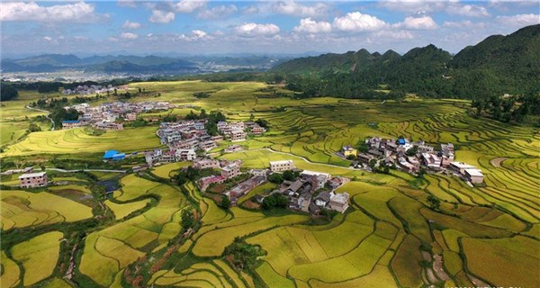Aerial view of paddy fields in SW China