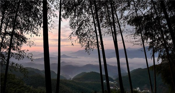 Scenery of bamboos forest, sea of clouds in Anhui
