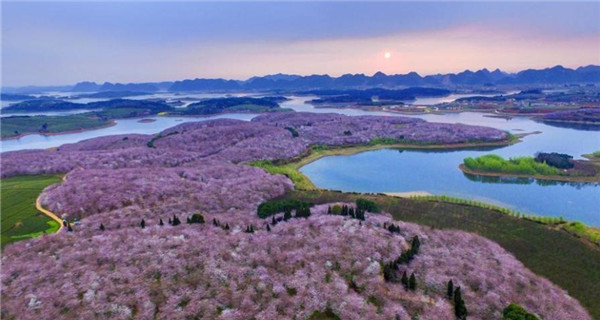 Scenery of cherry blossoms in SW China