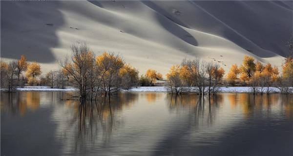 Amazing scenery of desert poplar forest in Xinjiang