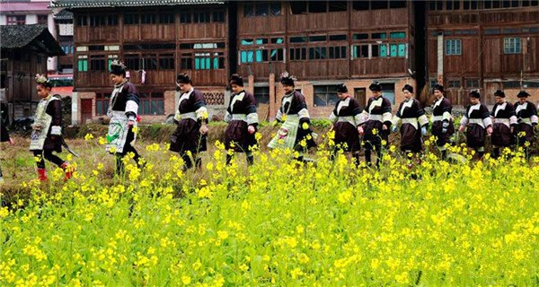 Spring flowers bloom in Guizhou