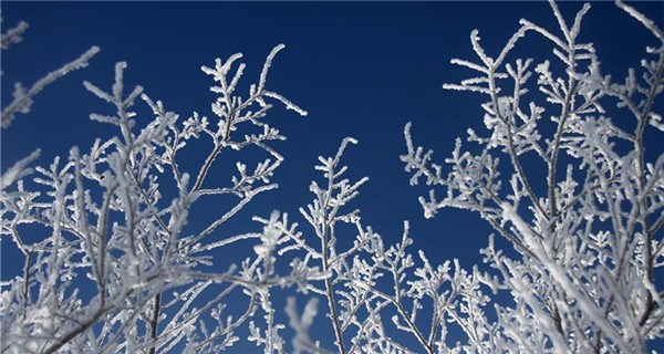 Cold wave brings rime to Altay in Xinjiang