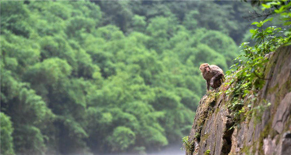 Macaques spotted having fun in Chongqing