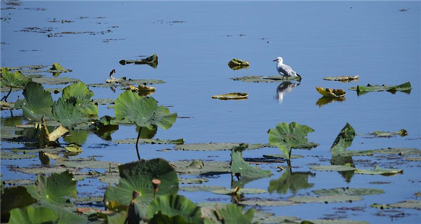 Momoge nature reserve in north China desirable place for migratory birds