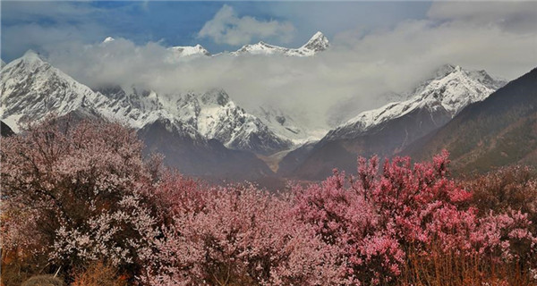 Flowers bloom along Nyang River in Tibet