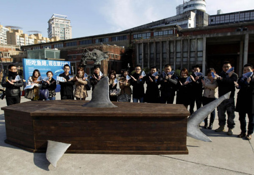 中国 任珑摄/Volunteers call for refusing to eat shark fin in Shanghai on Dec...
