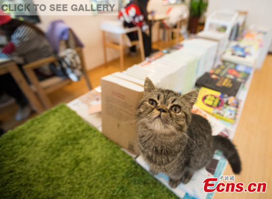 A cat crouches on books at a bookstore in Nanjing, Jiangsu province, Dec 4, 2014. The newly opened bookstore provides good news for book lovers who also love cats. The special bookstore is a joint venture between Xinhua Bookstore and a kitty café. More than 20 pure-bred cats can be seen in this store and they seem meek to customers. [Photo: China News Service/ Su Yang]