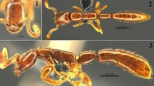 ant in microscope