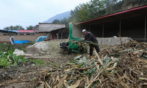 A Yanzi villager threshes corn into animal fodder in Guanghe county of the Linxia Hui Autonomous Prefecture, Northwest China's Gansu Province. (Photo: Chen Qingqing/GT)