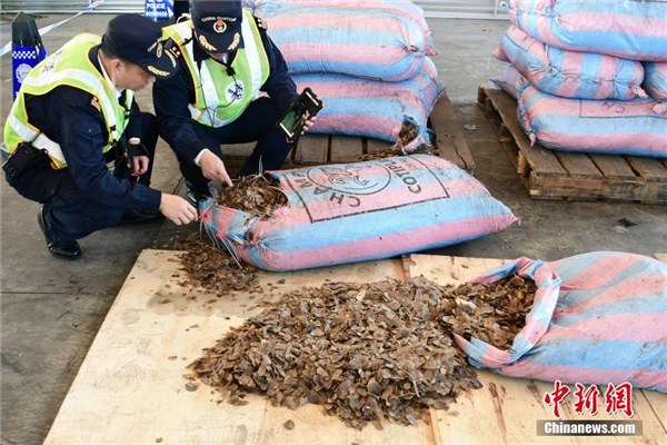 Customs staff check seized pangolin scales in Shenzhen, Guangdong province, on Nov 29, 2017. (Photo/Chinanews.com)