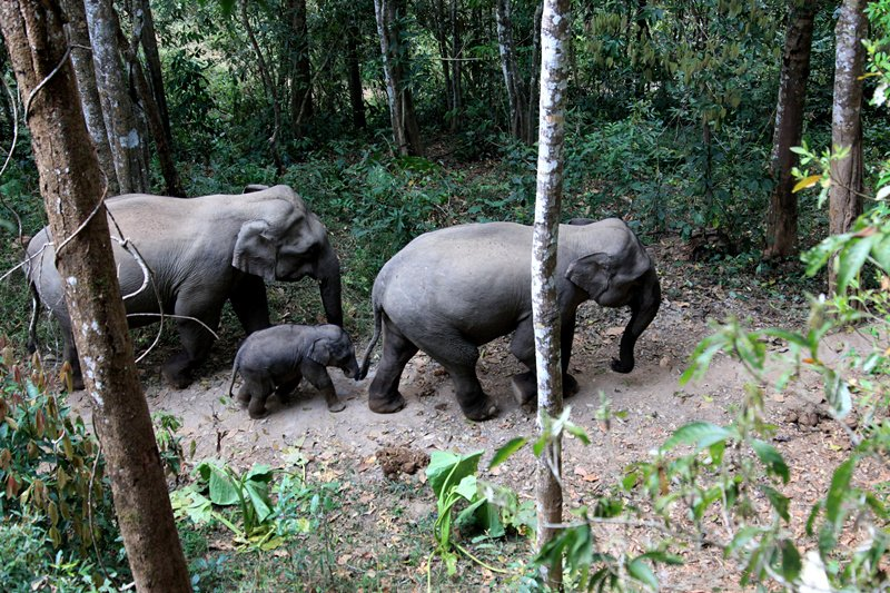 Smartphones help tame giant forest threat