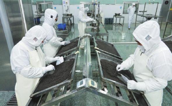 员工在浙江衢州卡卢加女王工厂分选鱼子酱。 (高尔强/中国日报摄)