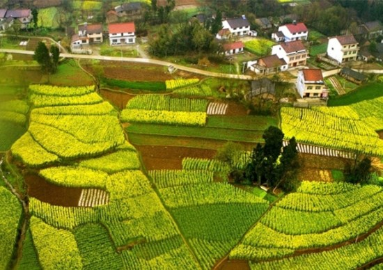 Photo taken on March 18, 2018 shows wheat and flowering rapeseed field in Zhonglou Village of Wuhou Township in Mianxian County, northwest China's Shaanxi Province. (Xinhua/Tao Ming)