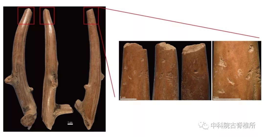 Archaeologists find China's earliest bone tools