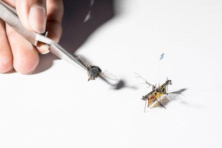 工程师开发出一种机器人昆虫由激光束供电