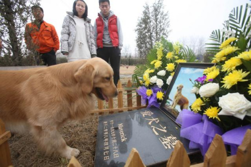 More owners willing to spend big on pet burial
