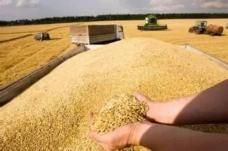 China imposes anti-dumping measures on U.S. distiller's grain