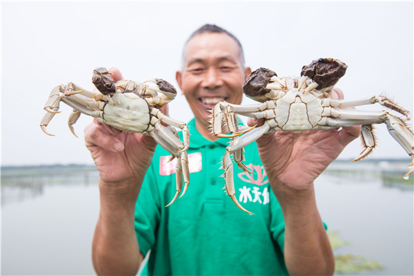 Online crab sellers losing money while building fresh food retail business