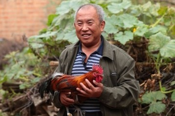 Run chicken run! Villagers count their chickens and their cash