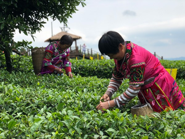 Lipton to sell Guizhou tea globally