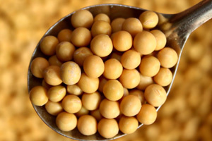 Soybean trade faces good prospects if disputes settled