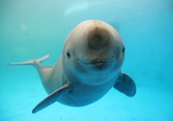 085377f109e6 A smiling porpoise at the Wuhan Institute of Hydrobiology. (File  photo China Daily