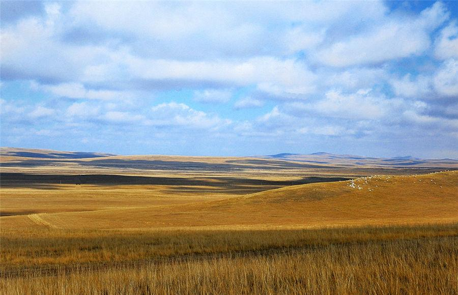 grassland features landscape Geography for kids: grassland biomes grassland explorer blue planet biomes: grasslands prairies in the prairie state what's it like where you live grasslands.