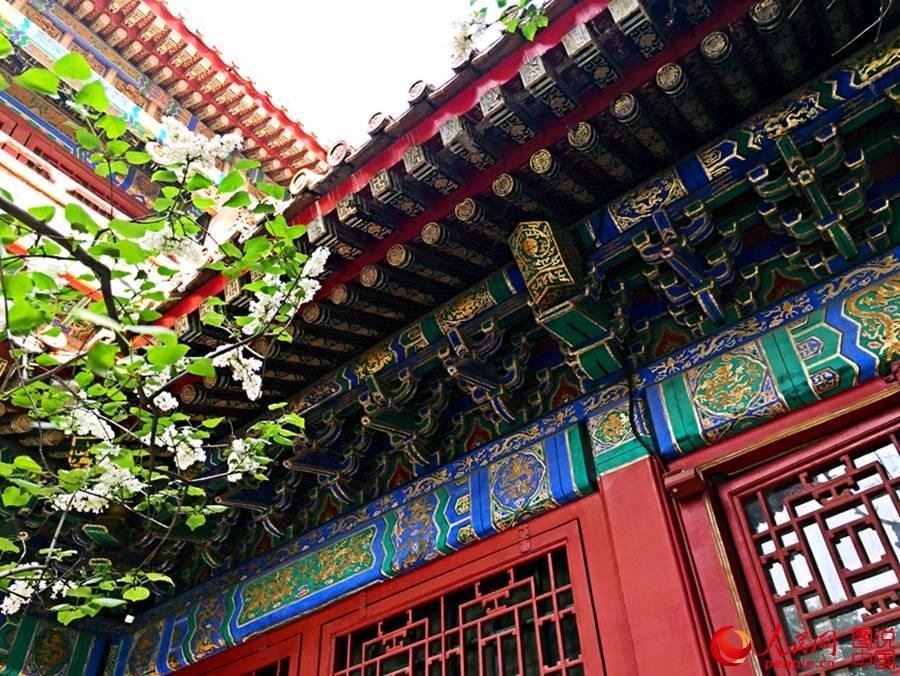 ... shows the magnificent views of the Forbidden City. (Photo/People.cn