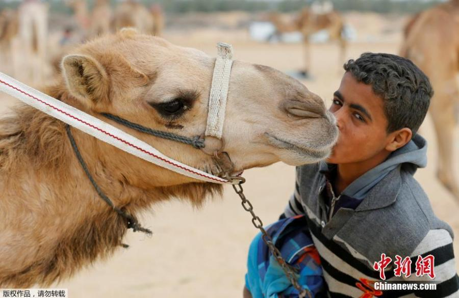 The child jockeys of camel racing in Egypt (5/5)
