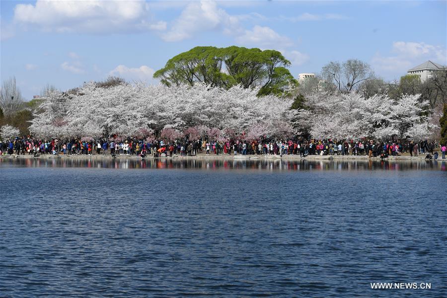Resultado de imagem para yuyuantan park beijing